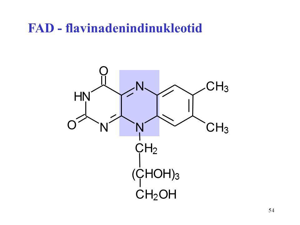 FAD - flavinadenindinukleotid