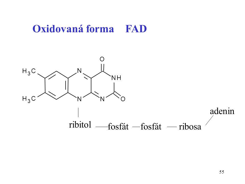 Oxidovaná forma FAD N H 3 C O adenin ribitol fosfát ribosa