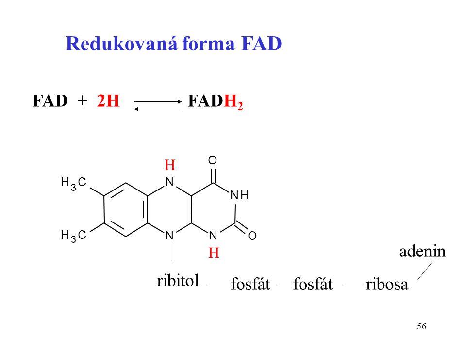 Redukovaná forma FAD FAD + 2H FADH2 adenin ribitol fosfát ribosa H H O
