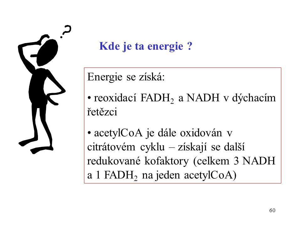 Kde je ta energie Energie se získá: reoxidací FADH2 a NADH v dýchacím řetězci.