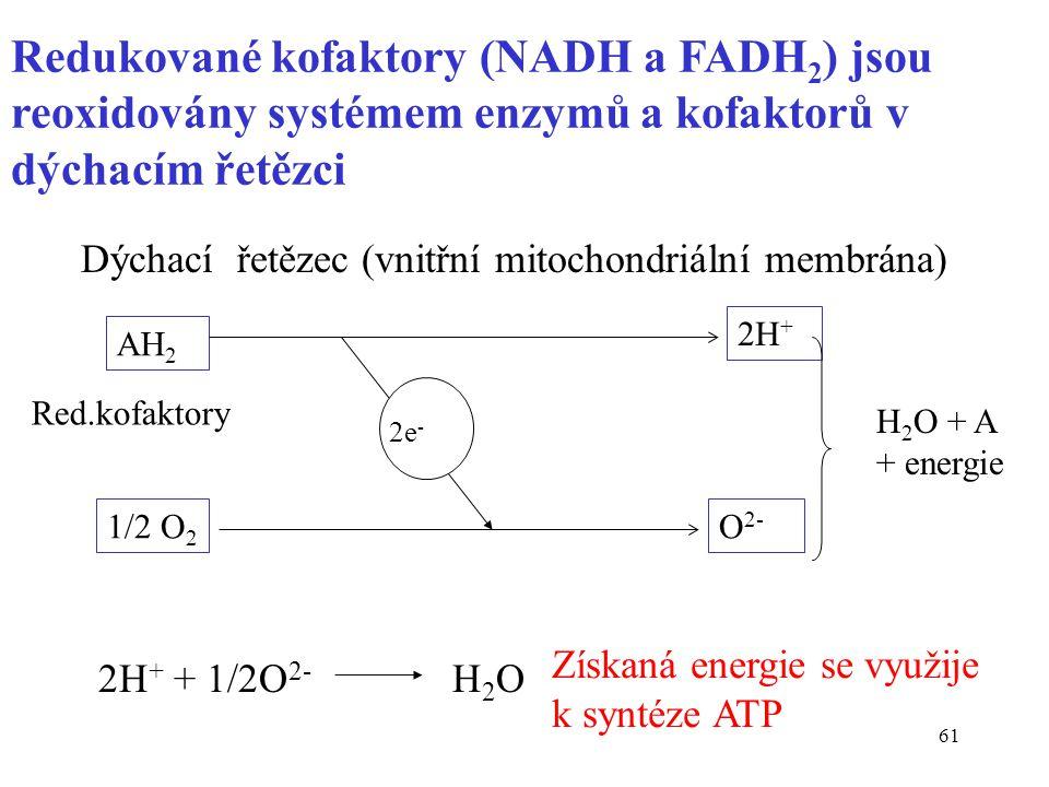 Redukované kofaktory (NADH a FADH2) jsou reoxidovány systémem enzymů a kofaktorů v dýchacím řetězci