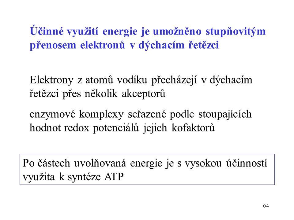 Účinné využití energie je umožněno stupňovitým přenosem elektronů v dýchacím řetězci