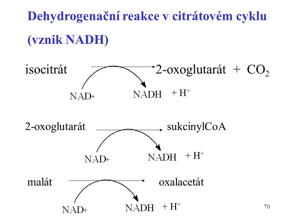 Dehydrogenační reakce v citrátovém cyklu (vznik NADH)