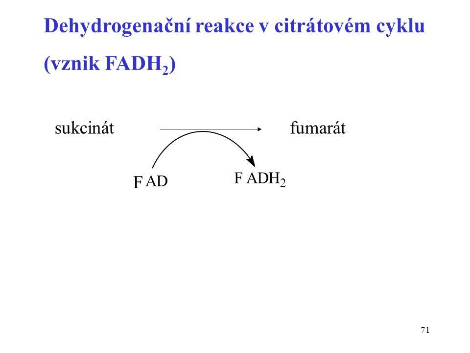 Dehydrogenační reakce v citrátovém cyklu (vznik FADH2)