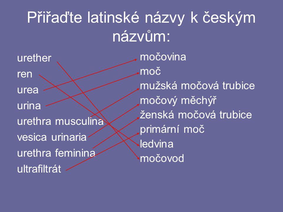 Přiřaďte latinské názvy k českým názvům: