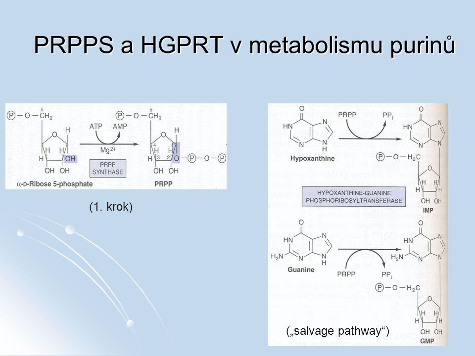 PRPPS a HGPRT v metabolismu purinů