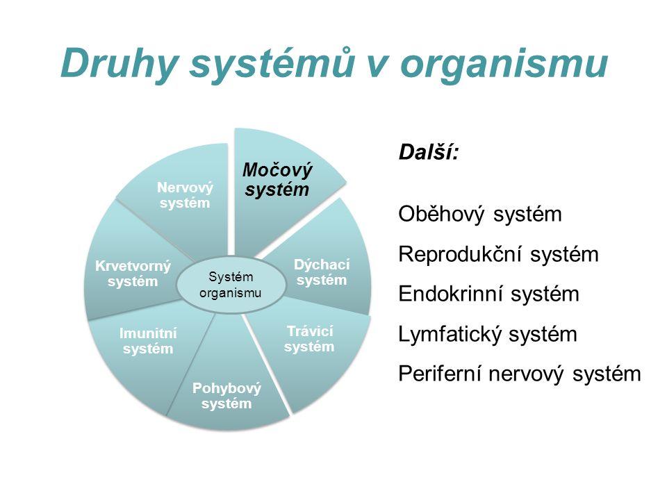 Druhy systémů v organismu