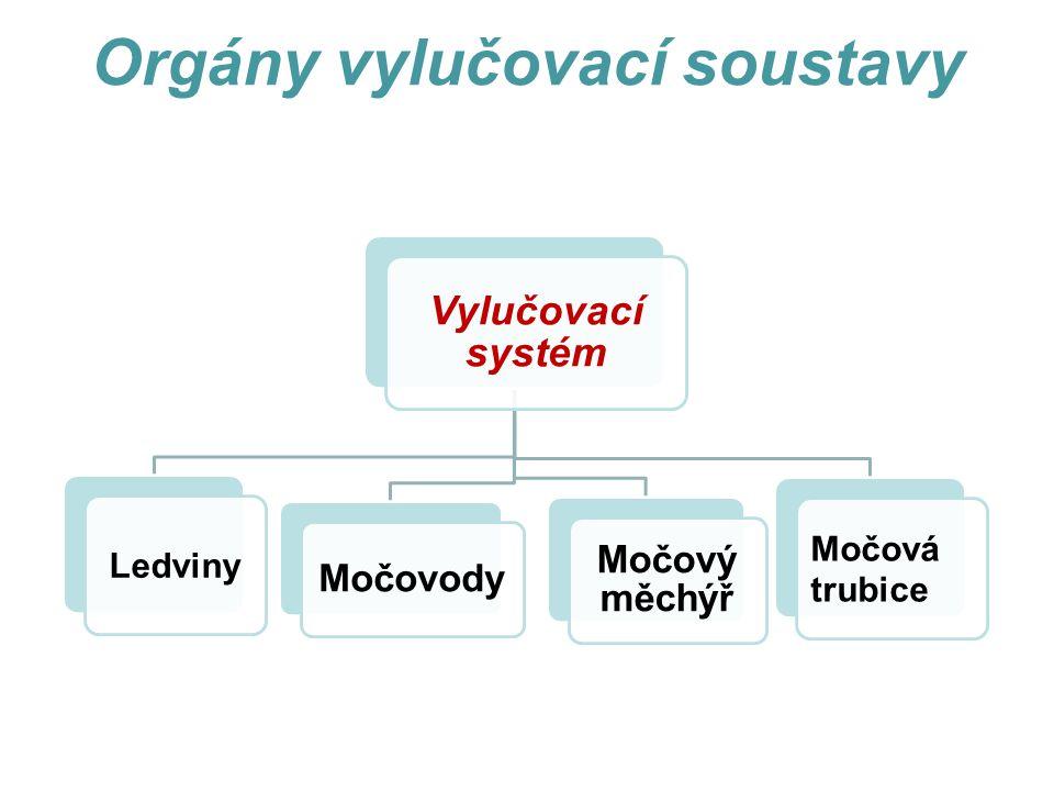 Orgány vylučovací soustavy