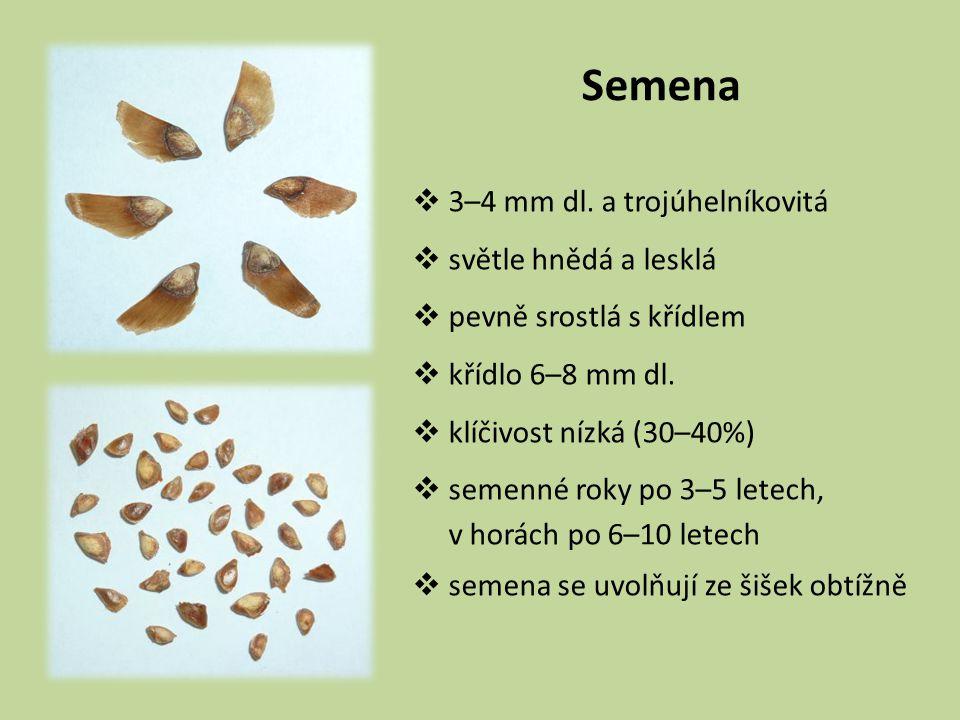 Semena 3–4 mm dl. a trojúhelníkovitá světle hnědá a lesklá
