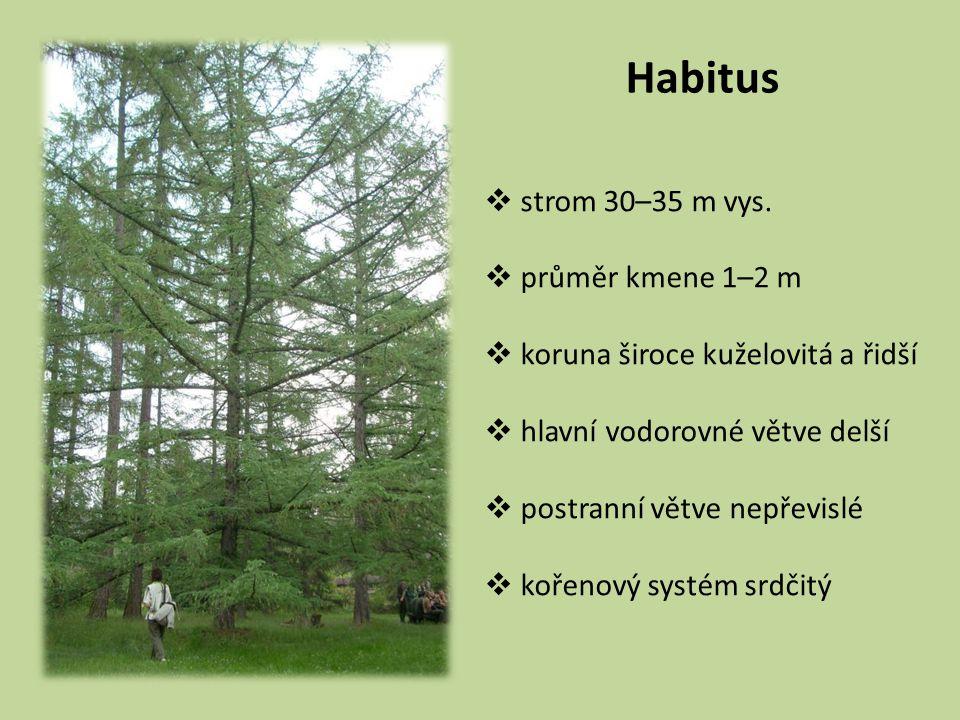 Habitus strom 30–35 m vys. průměr kmene 1–2 m