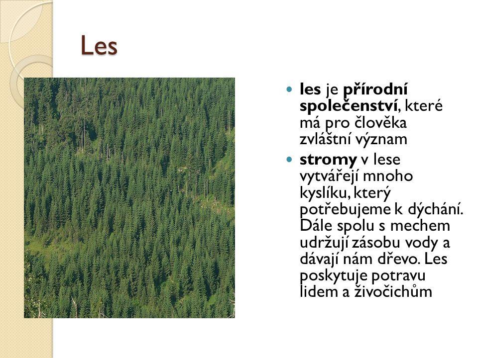 Les les je přírodní společenství, které má pro člověka zvláštní význam