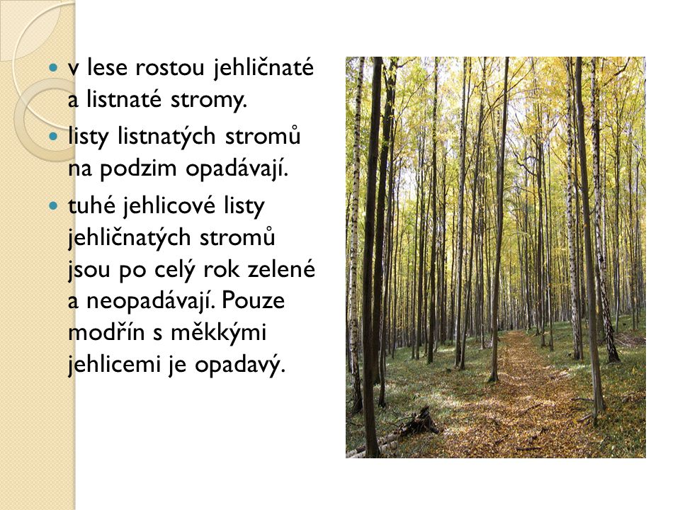 v lese rostou jehličnaté a listnaté stromy.