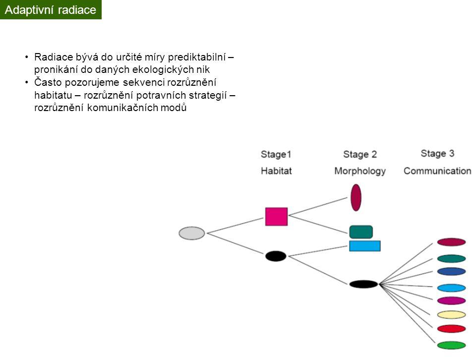 Adaptivní radiace Radiace bývá do určité míry prediktabilní – pronikání do daných ekologických nik.