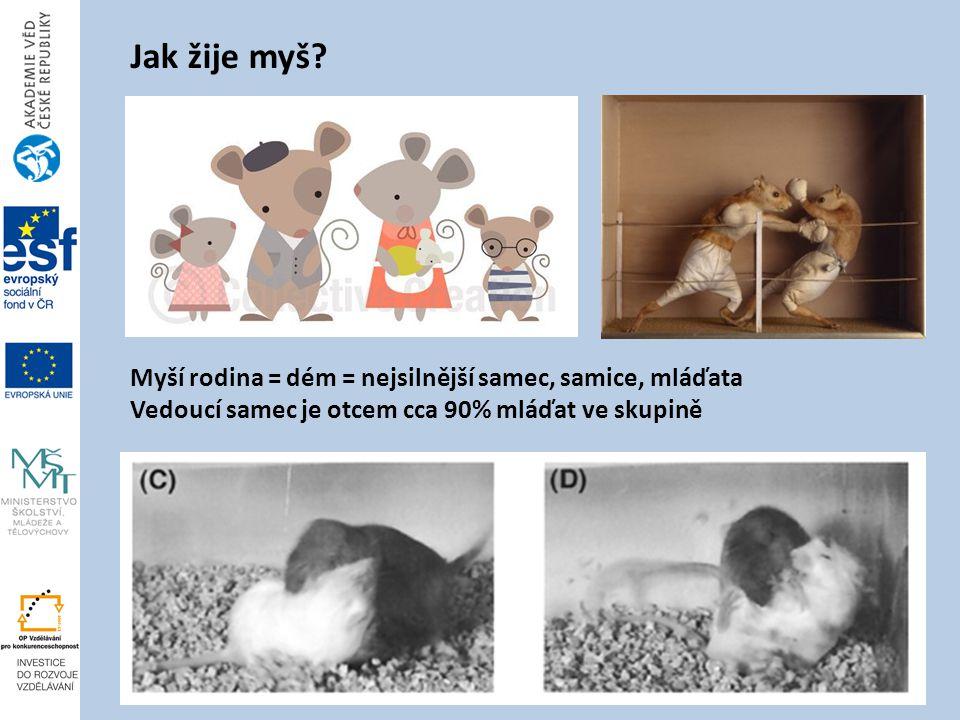Jak žije myš Myší rodina = dém = nejsilnější samec, samice, mláďata