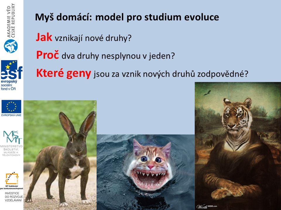 Myš domácí: model pro studium evoluce