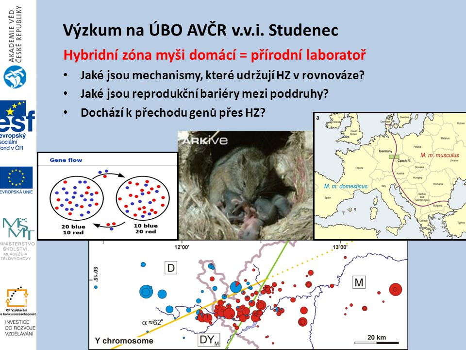 Výzkum na ÚBO AVČR v.v.i. Studenec