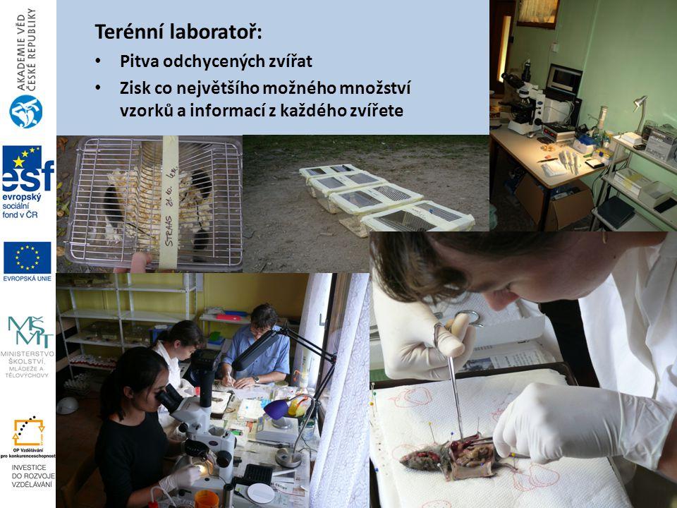 Terénní laboratoř: Pitva odchycených zvířat