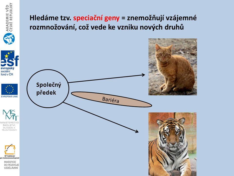 Hledáme tzv. speciační geny = znemožňují vzájemné rozmnožování, což vede ke vzniku nových druhů