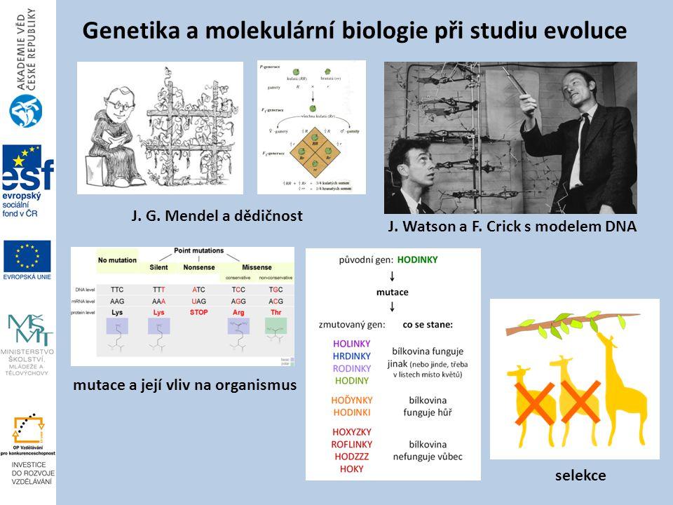 Genetika a molekulární biologie při studiu evoluce