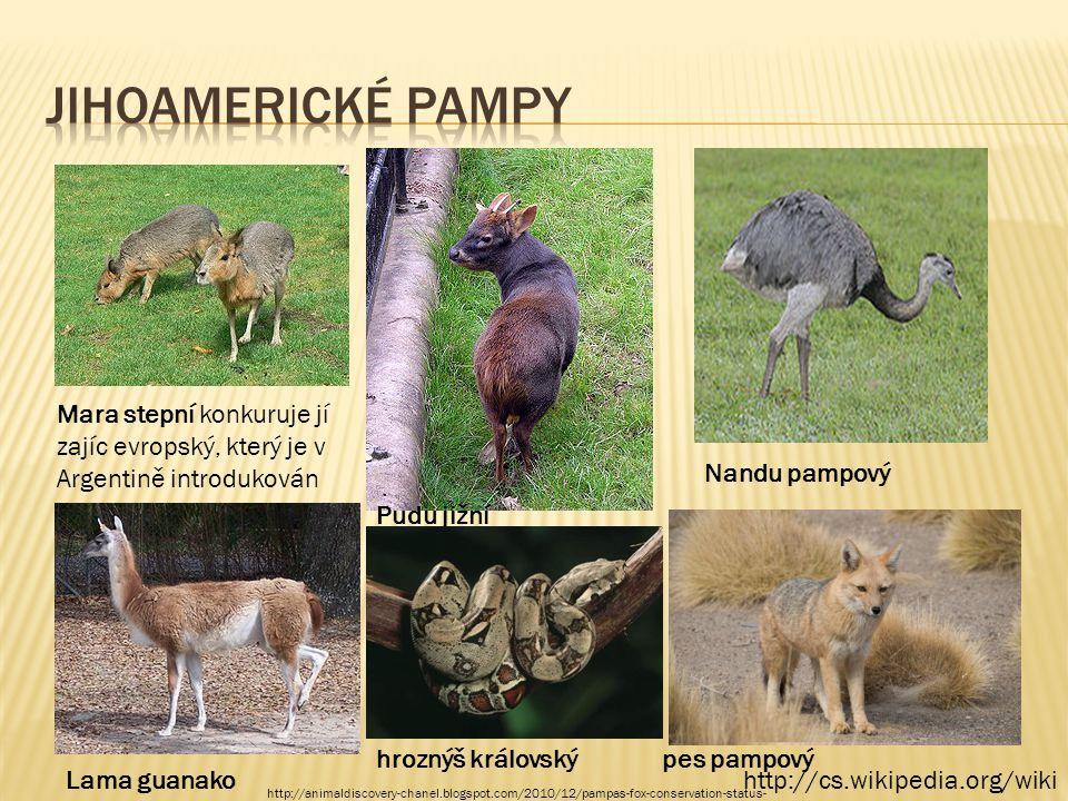 Jihoamerické pampy Mara stepní konkuruje jí zajíc evropský, který je v Argentině introdukován. Nandu pampový.
