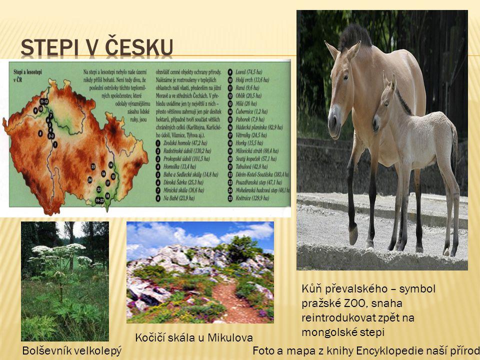 Stepi v česku Kůň převalského – symbol pražské ZOO, snaha reintrodukovat zpět na mongolské stepi. Kočičí skála u Mikulova.