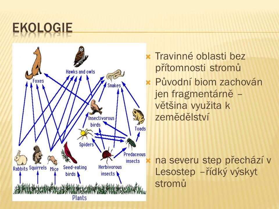 ekologie Travinné oblasti bez přítomnosti stromů