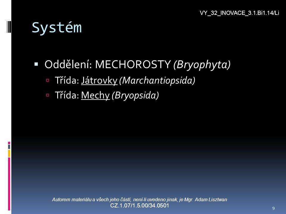 Systém Oddělení: MECHOROSTY (Bryophyta)