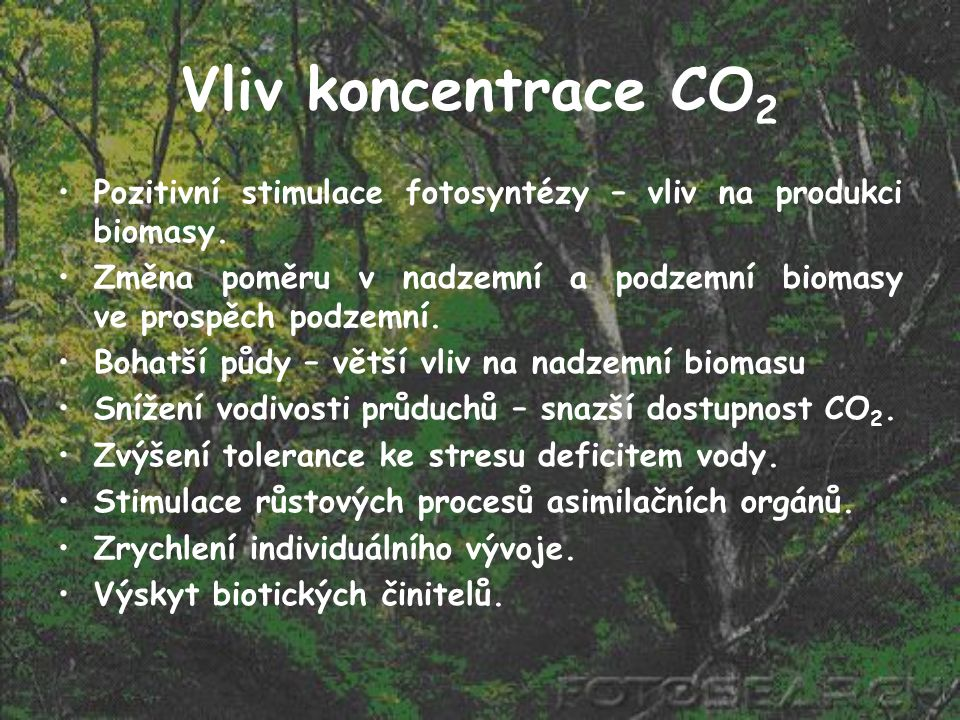 Vliv koncentrace CO2 Pozitivní stimulace fotosyntézy – vliv na produkci biomasy.