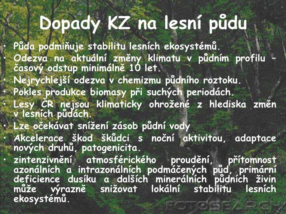 Dopady KZ na lesní půdu Půda podmiňuje stabilitu lesních ekosystémů.