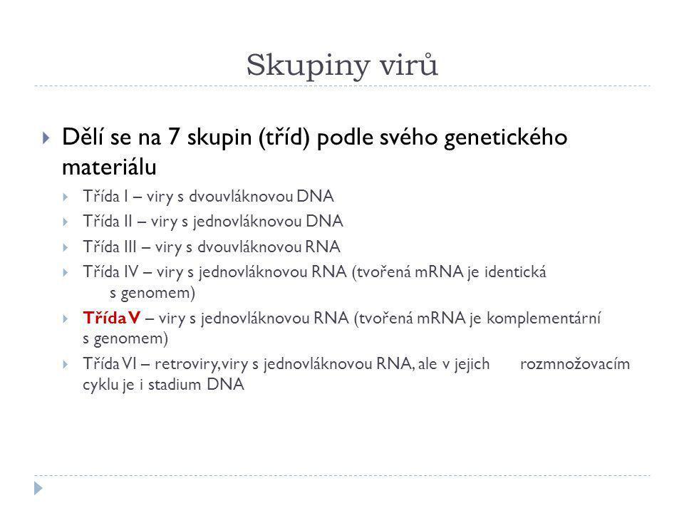 Skupiny virů Dělí se na 7 skupin (tříd) podle svého genetického materiálu. Třída I – viry s dvouvláknovou DNA.