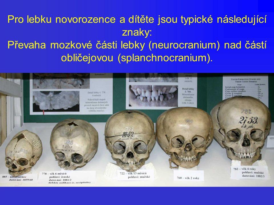Pro lebku novorozence a dítěte jsou typické následující znaky: Převaha mozkové části lebky (neurocranium) nad částí obličejovou (splanchnocranium).