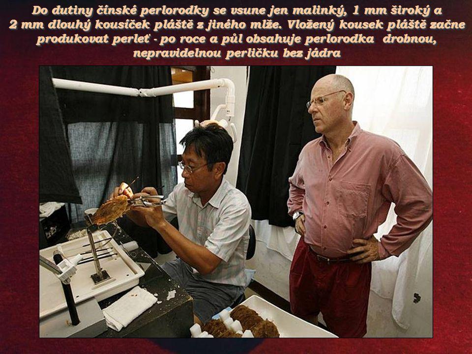 Do dutiny čínské perlorodky se vsune jen malinký, 1 mm široký a 2 mm dlouhý kousíček pláště z jiného mlže.