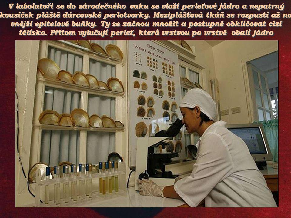 V labolatoři se do zárodečného vaku se vloží perleťové jádro a nepatrný kousíček pláště dárcovské perlotvorky.