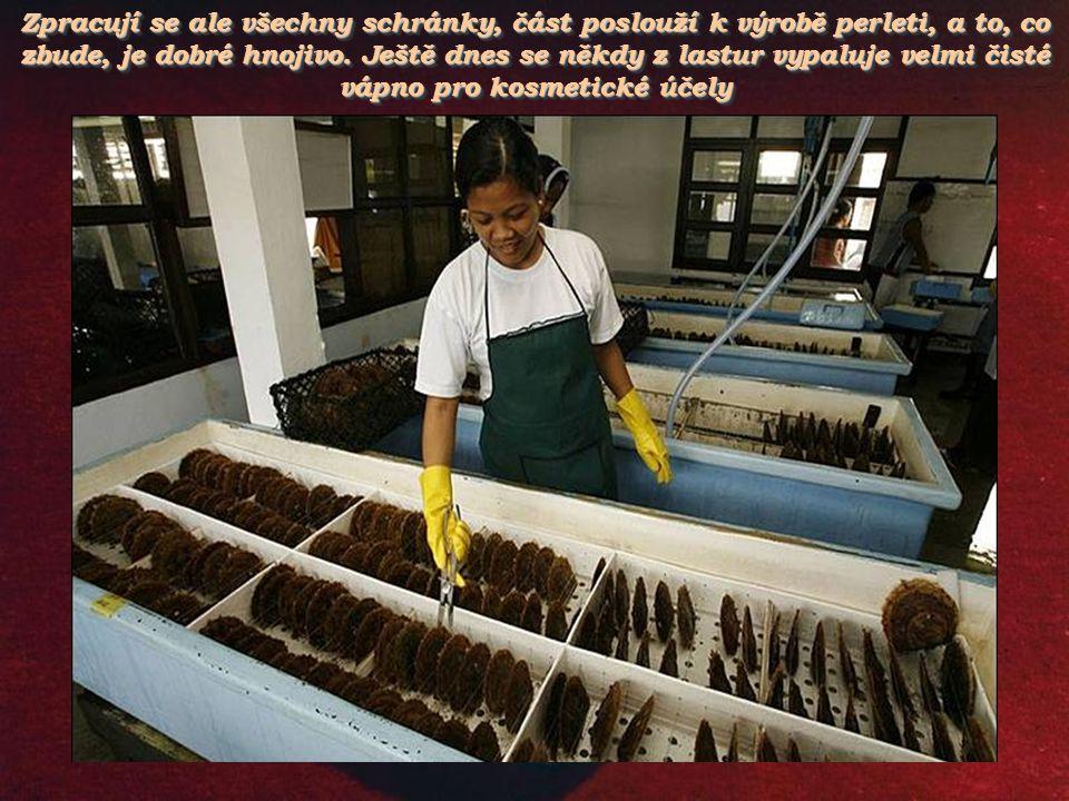 Zpracují se ale všechny schránky, část poslouží k výrobě perleti, a to, co zbude, je dobré hnojivo.