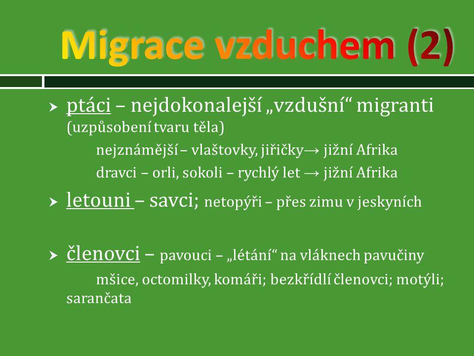 """Migrace vzduchem (2) ptáci – nejdokonalejší """"vzdušní migranti (uzpůsobení tvaru těla) nejznámější – vlaštovky, jiřičky→ jižní Afrika."""