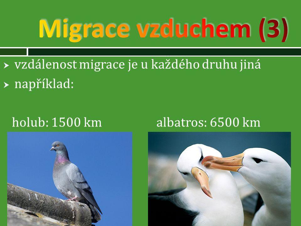 Migrace vzduchem (3) vzdálenost migrace je u každého druhu jiná