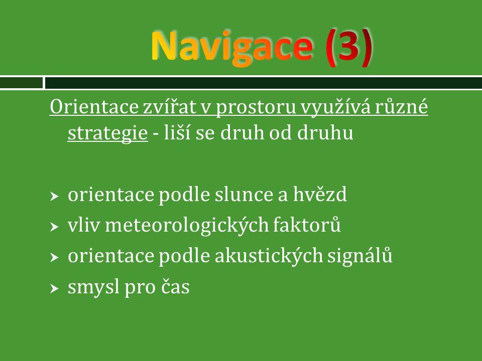 Navigace (3) Orientace zvířat v prostoru využívá různé strategie - liší se druh od druhu. orientace podle slunce a hvězd.