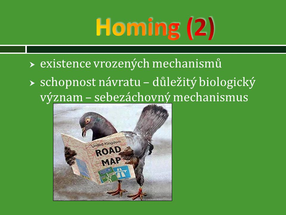 Homing (2) existence vrozených mechanismů