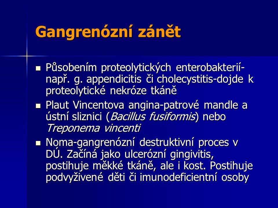 Gangrenózní zánět Působením proteolytických enterobakterií-např. g. appendicitis či cholecystitis-dojde k proteolytické nekróze tkáně.