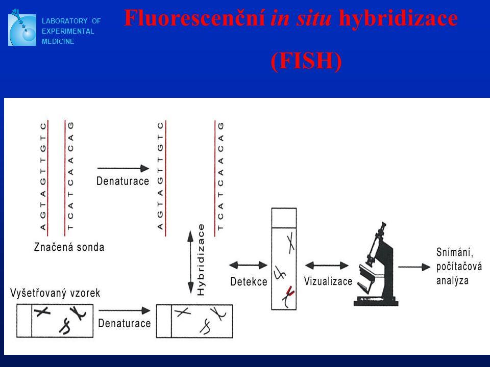 Fluorescenční in situ hybridizace (FISH)
