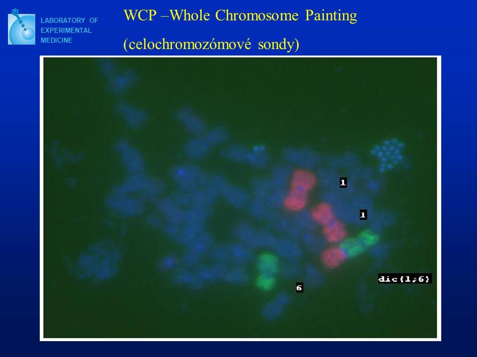 WCP –Whole Chromosome Painting (celochromozómové sondy)