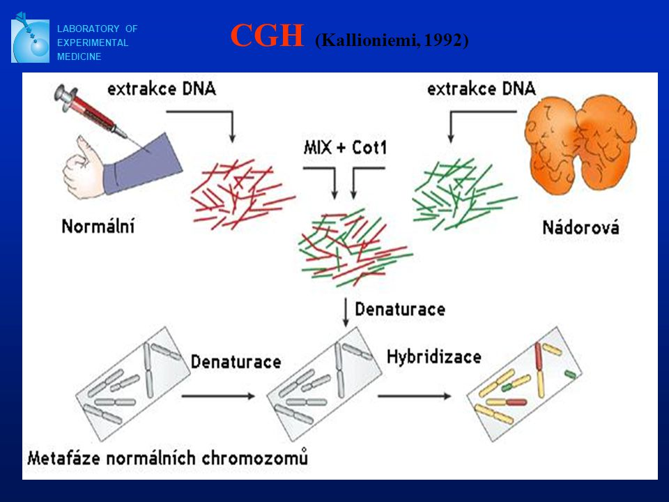 CGH (Kallioniemi, 1992) LABORATORY OF EXPERIMENTAL MEDICINE