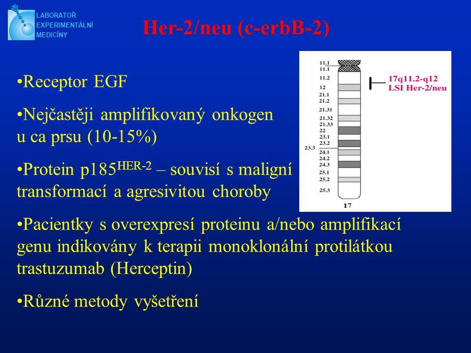 Her-2/neu (c-erbB-2) Receptor EGF