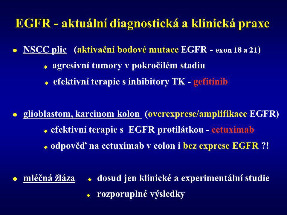 EGFR - aktuální diagnostická a klinická praxe