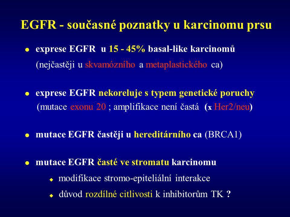 EGFR - současné poznatky u karcinomu prsu