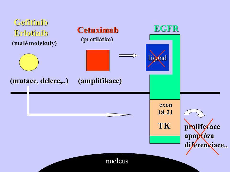 GefitinibErlotinib EGFR Cetuximab TK ligand