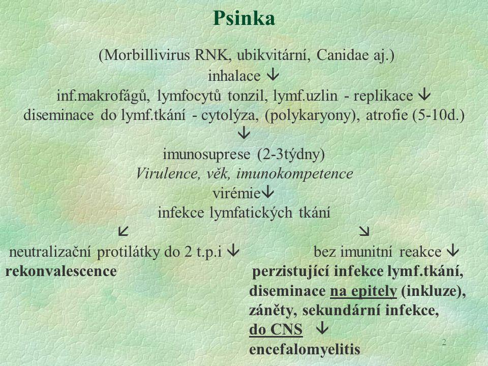 (Morbillivirus RNK, ubikvitární, Canidae aj.)
