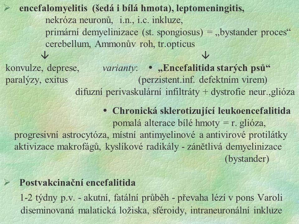 1-2 týdny p.v. - akutní, fatální průběh - převaha lézí v pons Varoli