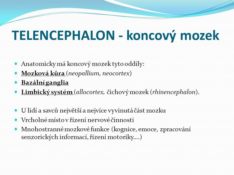 TELENCEPHALON - koncový mozek