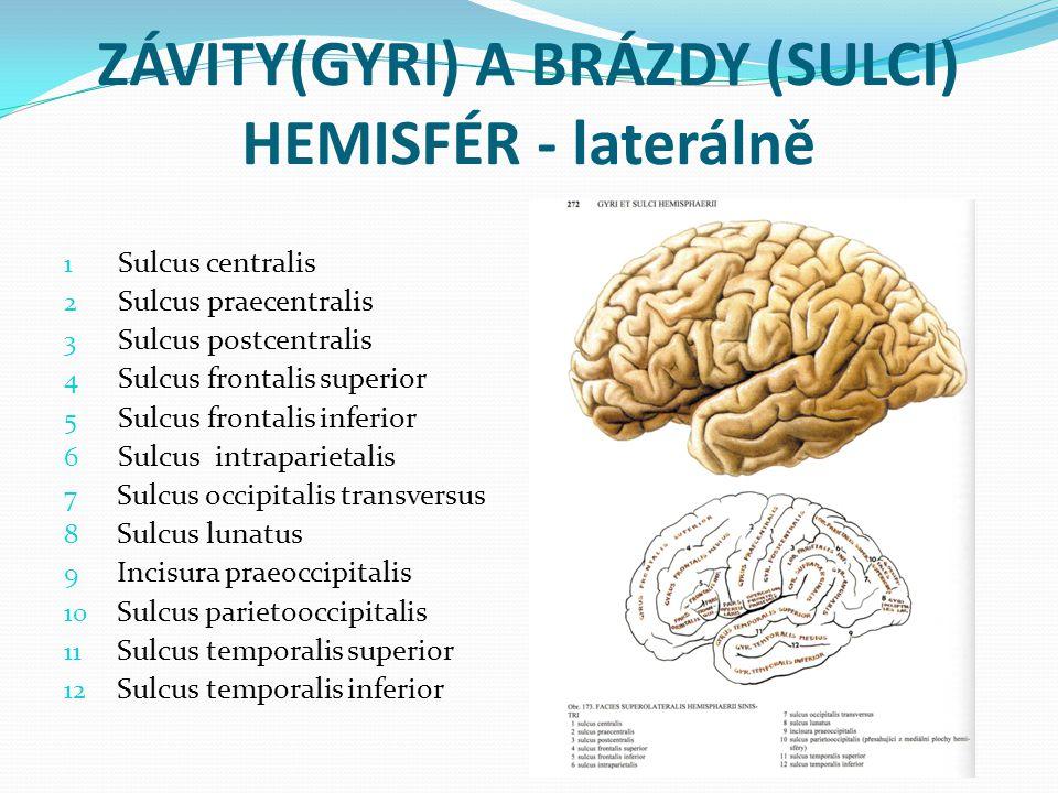 ZÁVITY(GYRI) A BRÁZDY (SULCI) HEMISFÉR - laterálně